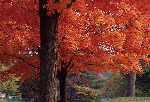Harold E McCray - Druid Park -- Baltimore-Maryland