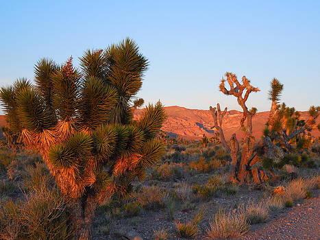 Dusk In The Desert by Donna Jackson