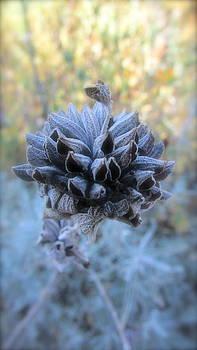 Dusty Flower by Allison Ritchey