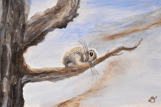 Dwarf Sugar Glider by Sherry Allen
