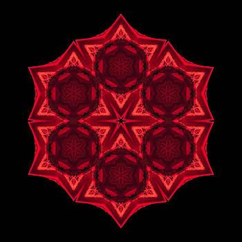 Dying Amaryllis III Flower Mandala by David J Bookbinder
