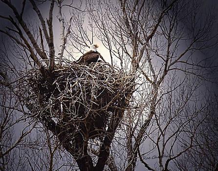 Kae Cheatham - Eagle at Home
