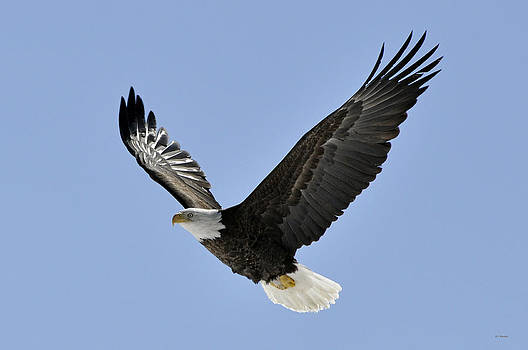 Eagle Class by RJ Martens