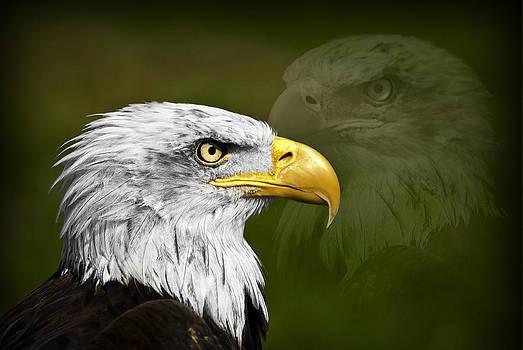 Eagle by Enrique  Coloma