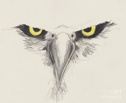 Eagle Eyes by David Jackson