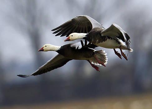 Eagle Heads by Jim E Johnson
