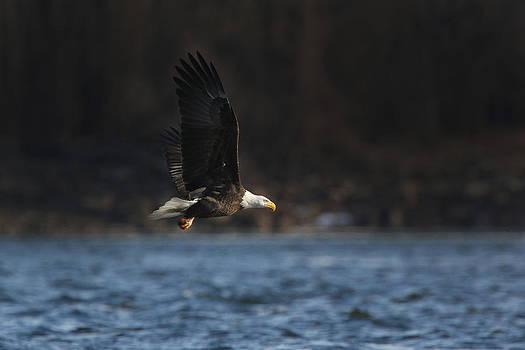 Eagle Ice Glide by David Yunker