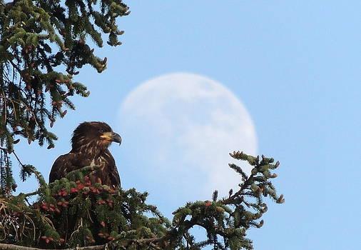 Eagles eye view by Karen Horn