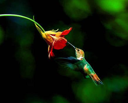 Early Hummingbird by Douglas MooreZart