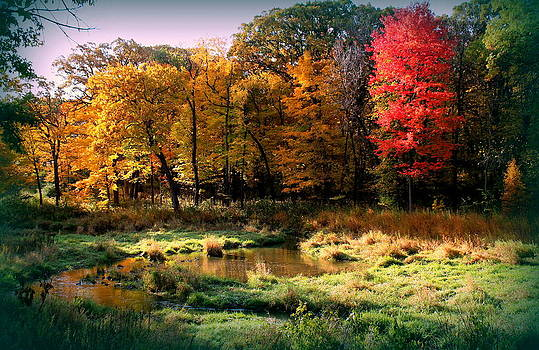 Rosanne Jordan - Early Morning Colors of Autumn