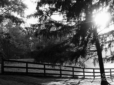 Early Morning by Deborah Fay