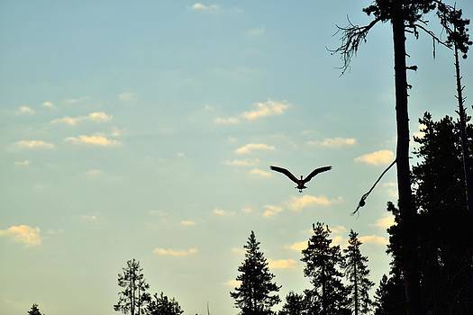 Early Morning Heron in Silhouette by Rich Rauenzahn