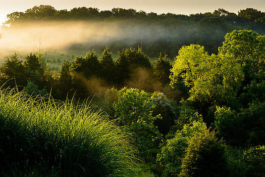 Early Morning Mist by Dan Girard