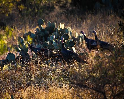 Early Morning Turkeys by Bryan Davis
