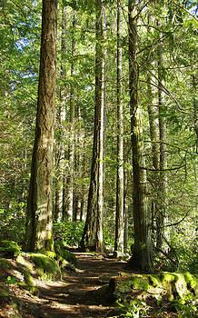 Marilyn Wilson - East Sooke Park Trail