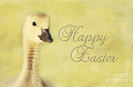Easter Gosling by Pam  Holdsworth