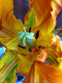 Easter Tulip by Donna Jacobi