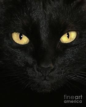 Sabrina L Ryan - Ebony Eyes