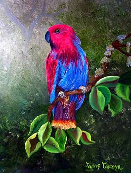 Eclectus Parrot by Janis  Tafoya