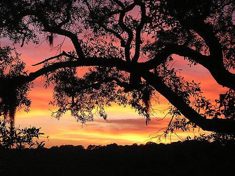 Edisto Island Sunset by Diane Frick