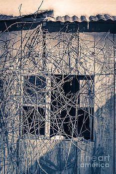 Edward Fielding - Eerie Old Shack