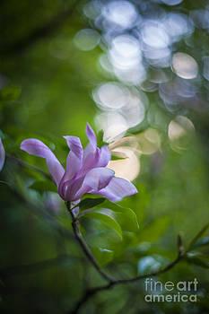 Mike Reid - Effervescent Magnolia