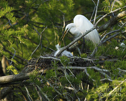 Egret and Baby Chat Photo by Luana K Perez
