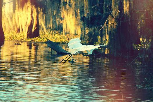 Egret Landing by Caitlyn Stykowski