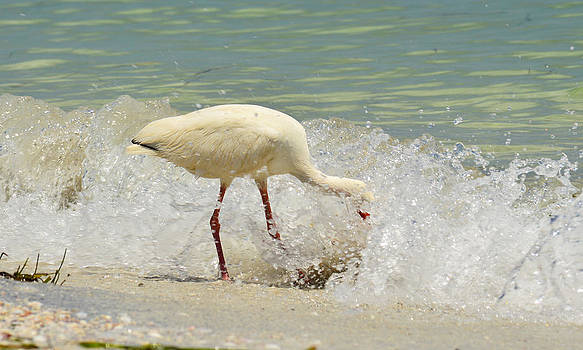 Egret Lunch time by Duane King
