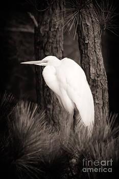 Michael McStamp - Egret