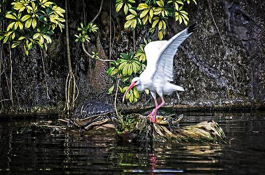 Egret wins by Cheryl Cencich