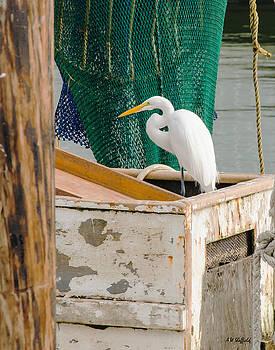 Allen Sheffield - Egret with Fishing Net