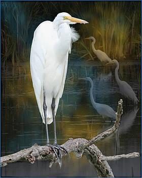 Egrets by John Kunze