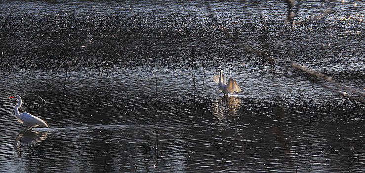 Egrets On the Lake by Sharon Batdorf