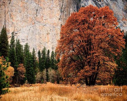 El Capitan and Fall Oak by Terry Garvin