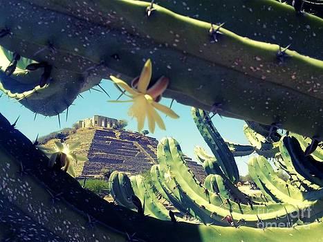 El Cerrito by Nyna Niny