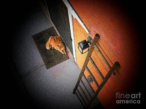 El Gato by Rita H Ireland