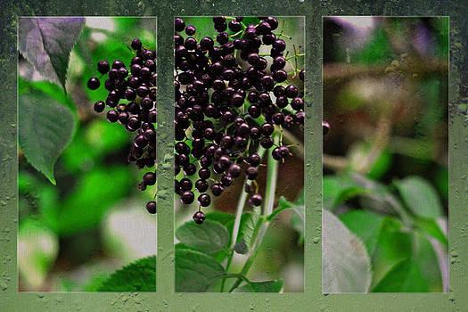 Elderberries by Nadeesha Jayamanne
