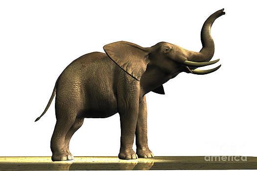 Corey Ford - Elephant