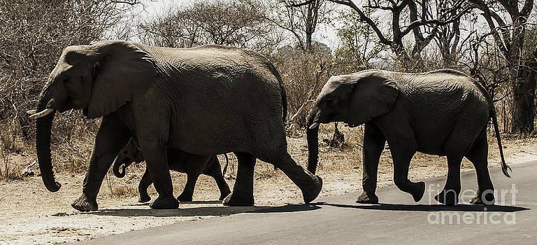 Elephant Family by Daniela White
