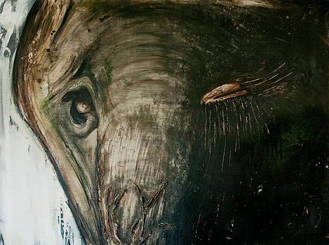 Elephant in the Dark by Justine Tiburzi