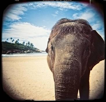 Elephant on the Beach by Carol Whaley Addassi