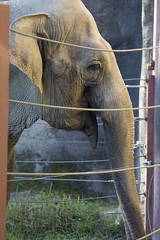 Elephant  by Ronald Hanson