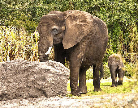 Elephants  by Fred L Gardner