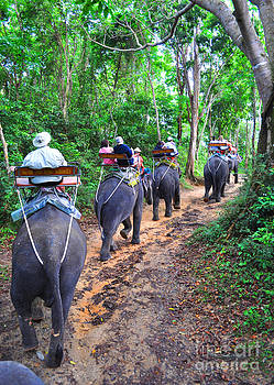 Elephants on Assignment by Carolyn Burns Bass