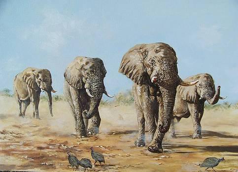 Elephants' Return by Robert Teeling