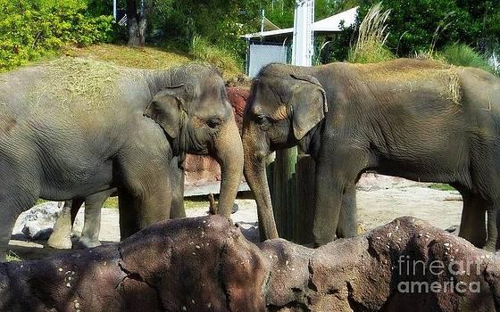 Elephants Snuggle by Jeanne Forsythe