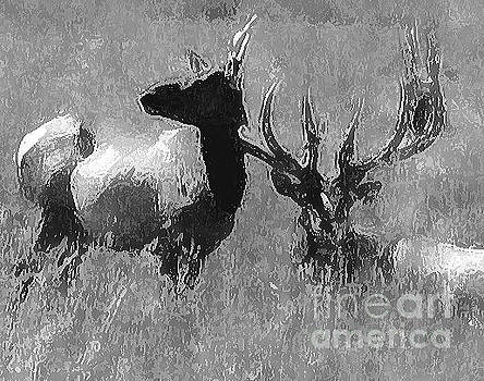 Elk Artwork  by Juls Adams