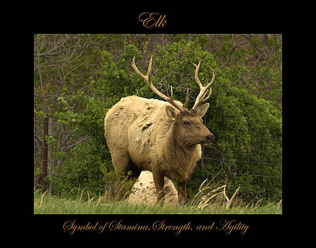 Elk Symbol of by Marty Maynard