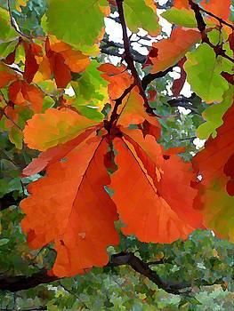 Elm Leaves by Anne Sterling
